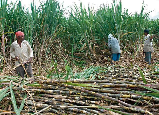 कृषिमा विदेशकै भर : एक वर्षमा डेढ खर्बको आयात