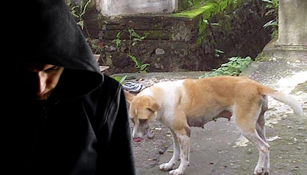 कुकुर बलात्कार आरोपमा युवक हिरासतमा !