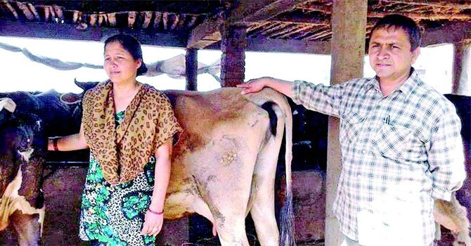 स्नातकोत्तर दम्पतीको कथा: दूध र गोबर बेचेर २० लाख