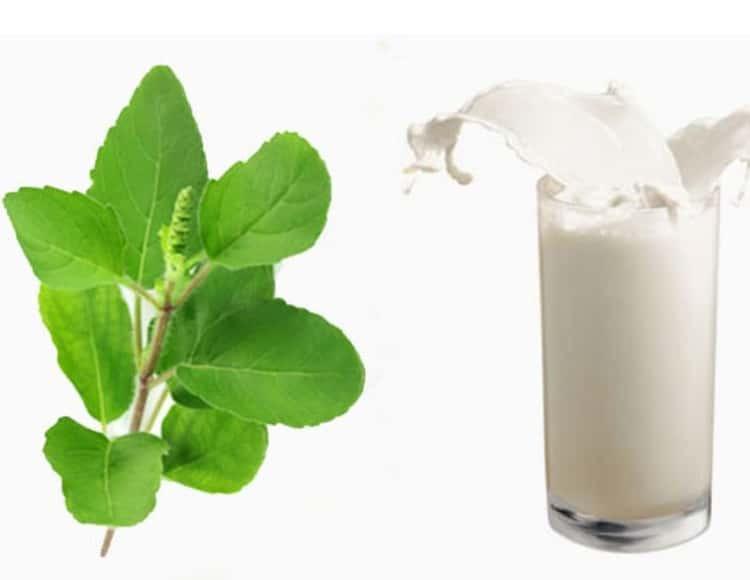 तुलसीको पात दूधमा उमालेर पिउँदाका फाइदा
