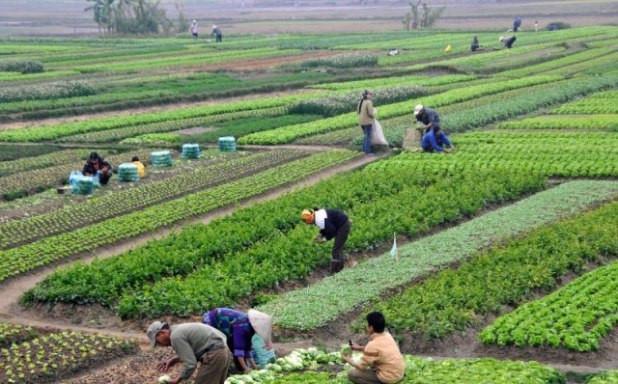 कृषि रणनीति तय गर्दै सरकार : प्रदेशमन्त्रीसँग मन्त्री भुसाल