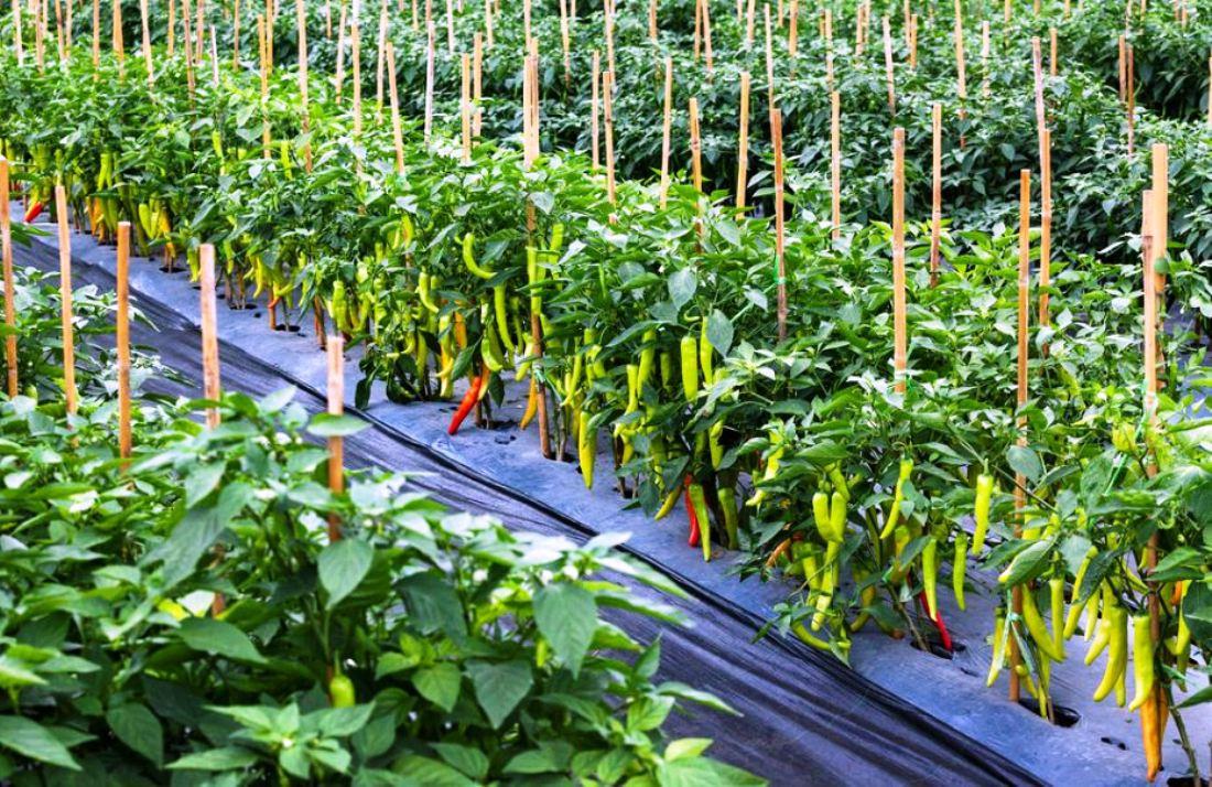 कृषिमा आत्मनिर्भर बन्न 'एक वडा, एक उत्पादन' कार्यक्रम