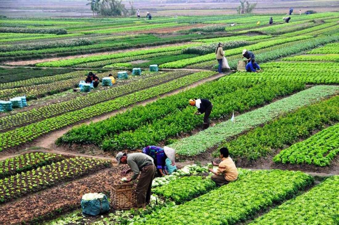 स्याङ्जाका १०  गाउँलाई नमुना कृषिगाउँ बनाइँदै