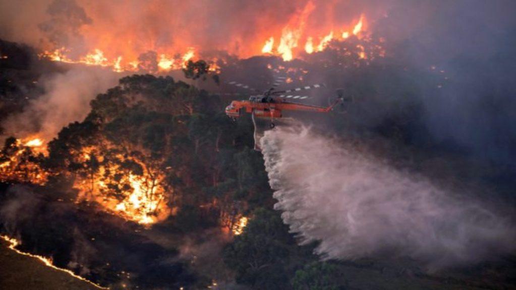 अस्ट्रेलियनले नै लगाउँछन् जंगलमा आगो