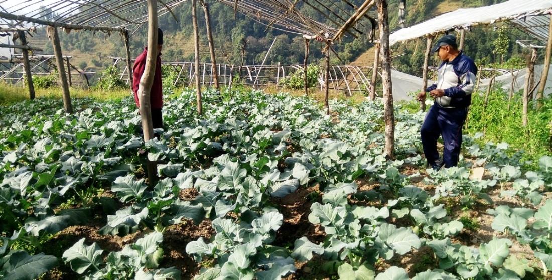 'साना कृषि मोडेल फार्म स्थापना' का लागि ३९ फार्म छनोट