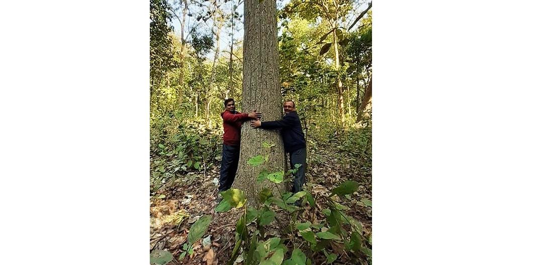 वृक्षमानवकाे वृक्षसँगको भ्यालेन्टाइन