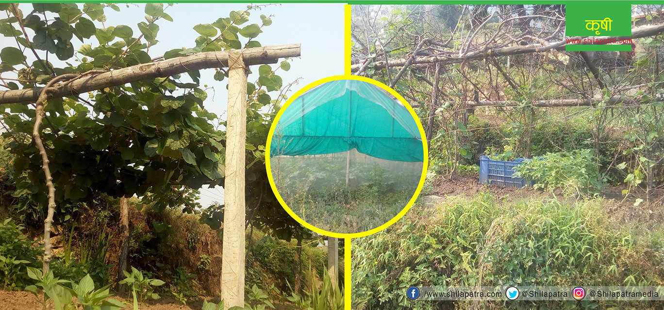 बरातु गाउँको कृषि क्रान्ति