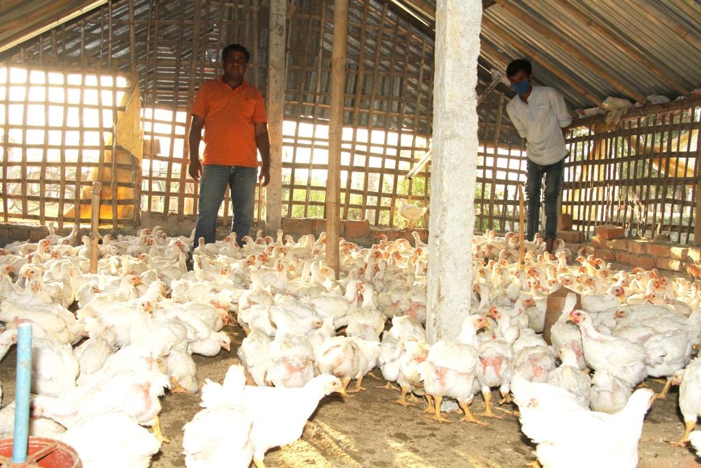 लकडाउनको असर : सागकै भाउमा कुखुरा बेच्दै किसान