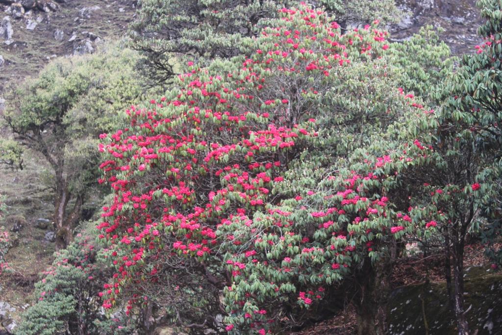 गुराँसको राजधानी टीएमजे क्षेत्र सुनसान (तस्वीरसहित)