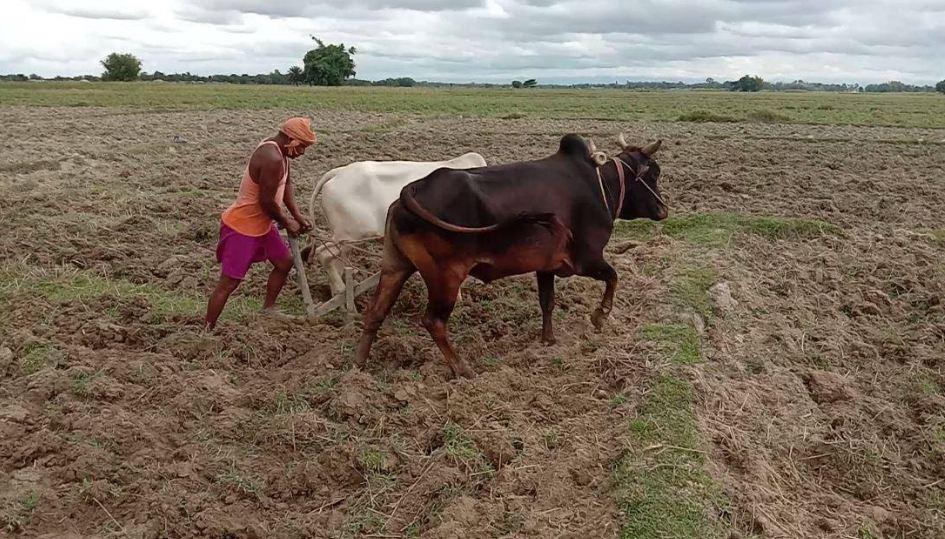 काेराेनाले रोजगारी गुमेपछि कृषिमा रमाउँदै युवा
