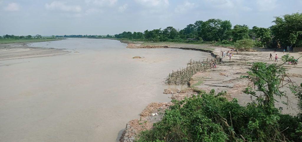 मोरङमा नदी नियन्त्रणका नाममा बाढीसँगै बग्छ लाखौँ मूल्यको बाँस